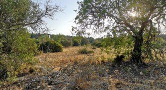 Terreno Agrícola perto Moncarapacho
