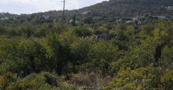 Terreno com 1.2ha, tem 3.000m2 inserido em zona urbana