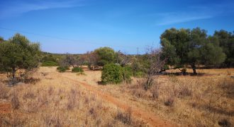 Terreno rústico com 1ha perto de Moncarapacho